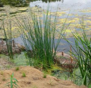 Brush bundles and new emergent plants