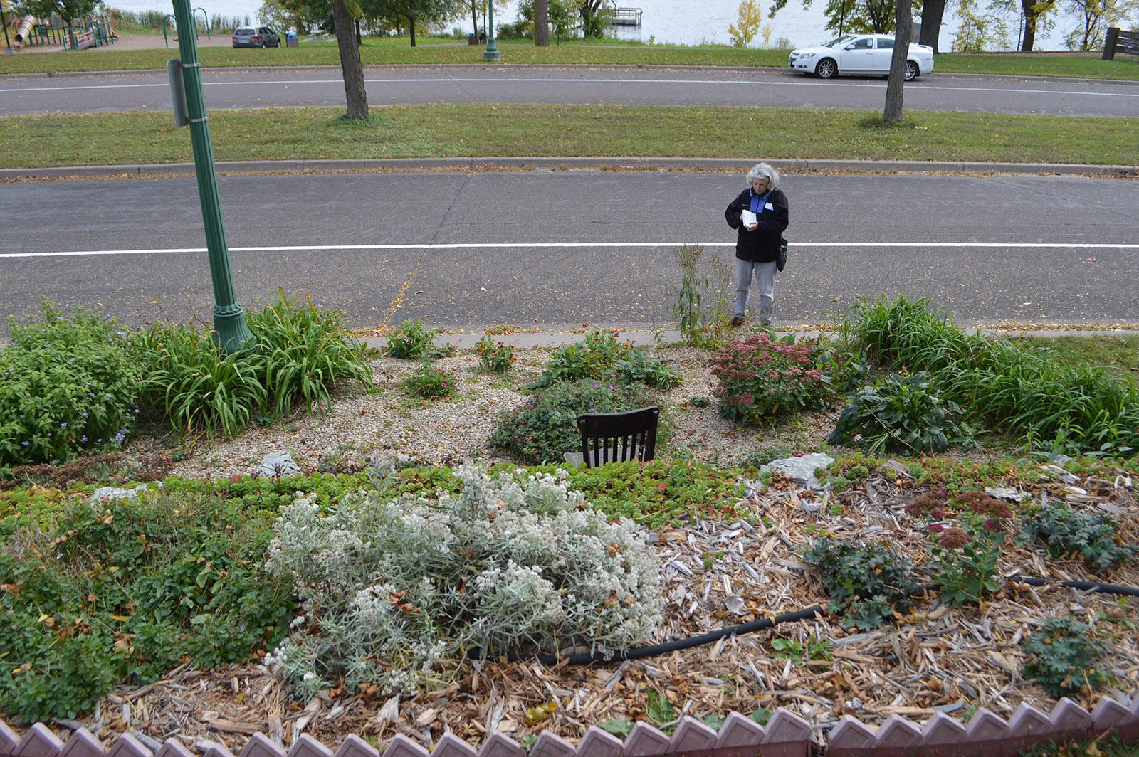 Chris Strong surveys rain garden