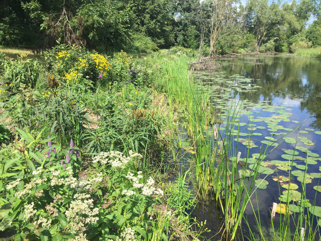 emergent vegetation