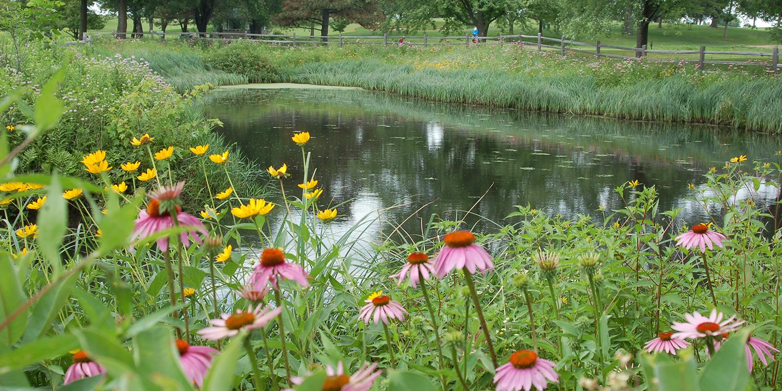 Keller Golf Course pond