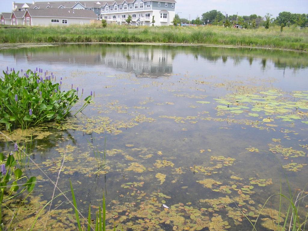 Ames Lake pond