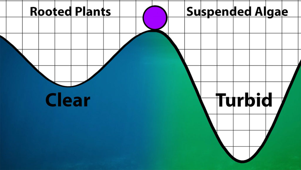 Turbid and clear state chart