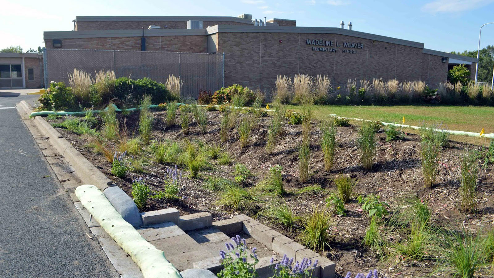 Weaver Elementary School rain garden